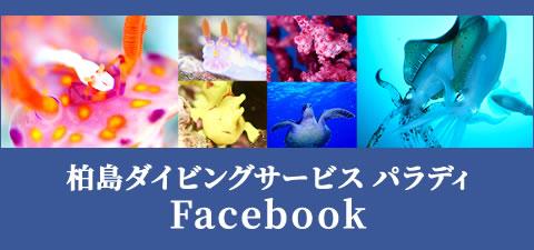 柏島パラディfacebook