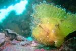 海藻みたいな魚おった。