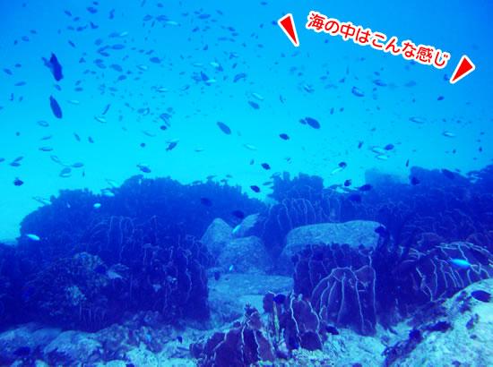 海の中はこんな感じ